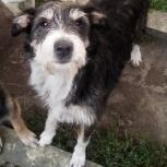 Собачка Дори - хозяйка во двор дома, Челябинск