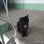Кошечка, приносящая счастье, Челябинск