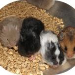 Приму в дар клетку с грызунами (мыши крысы хомяки морские свинки))), Челябинск