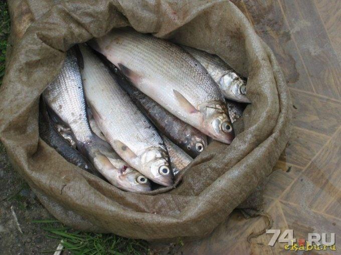 фото сырок рыба