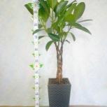 Дерево для дома и офиса, Челябинск