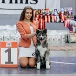 Акита щенки, Челябинск