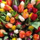 Продам тюльпаны оптом к 8 марта, Челябинск