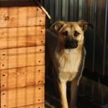 Собака Ричи в добрые руки, Челябинск