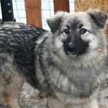 Собака нюша в добрые руки, Челябинск