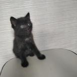 Отдам в добрые руки котенка, Челябинск