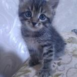 Даром умненький приученный к лотку очень симпатичный котёнок, Челябинск