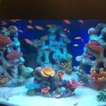 Декор для аквариума, Челябинск