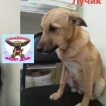 Подрощенный щенок небольшого размера., Челябинск