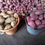 Продам качественный деревенский картофель, Челябинск