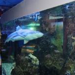Выставка морских и пресноводных аквариумов, Челябинск