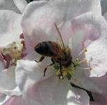 Мёд розовое и жёлтое цветение луговой, Челябинск