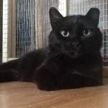 Брутальный толстячок кот, Челябинск