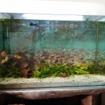 Срочно продам аквариум, Челябинск