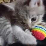 Отдам красивого котёнка, девчушку., Челябинск