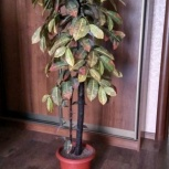 Декоративное дерево в горшке с наполнителем, Челябинск