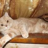 Он ждёт её, вязка для кота, Челябинск
