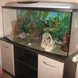 продам аквариум, Челябинск