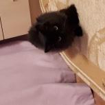 Отдам кота, Челябинск