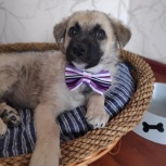 Двухмесячный щенок, Челябинск