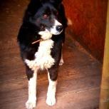 Собака дуся в добрые руки, Челябинск