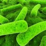 Пробиотики для поросят, Челябинск
