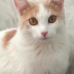 Зефирка кошка, Челябинск