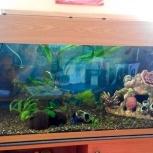 Оформление аквариума, Челябинск