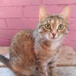 В любящие руки кошка, Челябинск