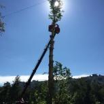 Спил деревьев. Расчистка участков, Челябинск