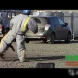 Дрессировка собак профессионально, Челябинск