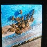 пчелы семьи, Челябинск