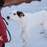 Пёс Кузя в добрые руки, Челябинск