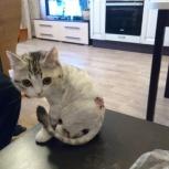 Стрижка кошек на дому, Челябинск