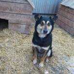 Собака маша в добрые руки, Челябинск