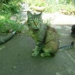 ищу хозяина кошке, Челябинск
