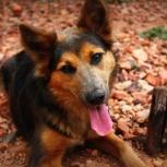 Собака Кэри  вдобрые руки, Челябинск