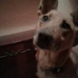 Отдам собаку в хорошие руки, Челябинск