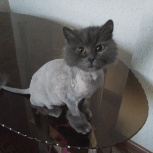 Потерялась кошечка, Челябинск