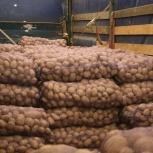картофель, Челябинск