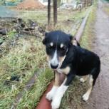 щенки в добрые руки, Челябинск