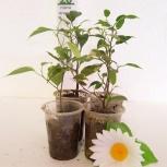 Комнатные растения, Челябинск