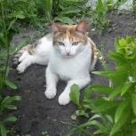 Кошка Муся в добрые руки, Челябинск