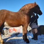 Лошади, Челябинск