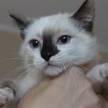 Малышка кошка в добрые руки., Челябинск