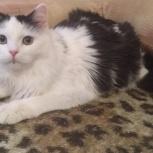 Прелестная котенок девочка, Челябинск