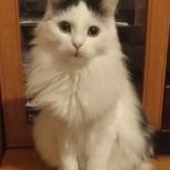 Ответственным людям кошку, Челябинск