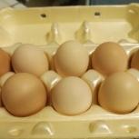Инкубационное яйцо породистых курей, Челябинск