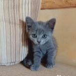 Котятки 2 мес ищут дом, Челябинск
