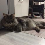 Суперласковый кот Сенька., Челябинск